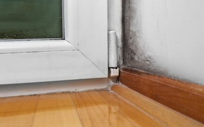 Warning Signs of Mold in Your House