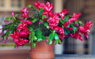 5 Non-Toxic Houseplants That are Safe for Kids and Pets