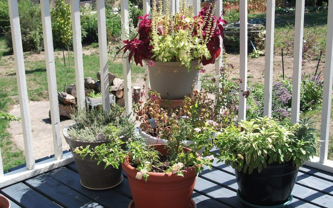 upgrade your deck with a container garden