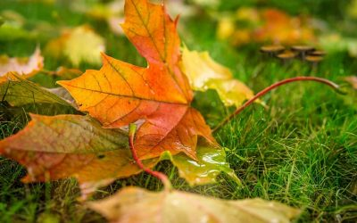 Fall Lawn Maintenance to Prepare for Next Year